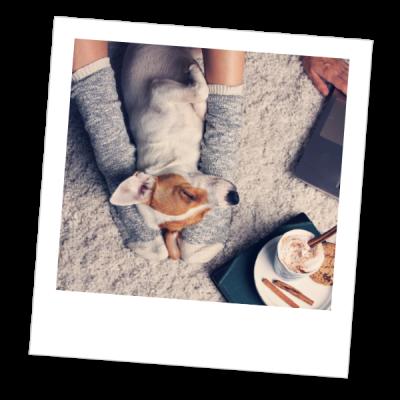 Hond-comfort-polaroid